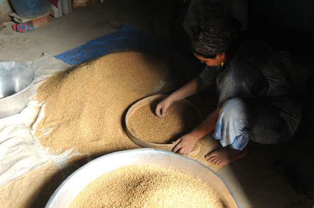 Wheat being prepared for baking bread in Deir Al-Maymun.