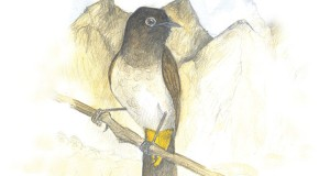 bulbul nature notes