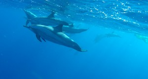 featured-dolphins