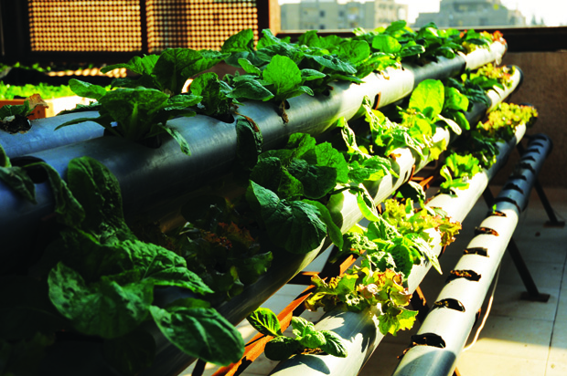 More and more people are turning to rooftop gardens as a rewarding way to grow healthy vegetables without chemicals.