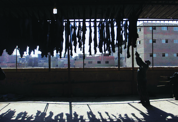 A worker hangs leather hides in the sun to dry out.